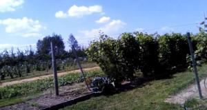 Bio gyümölcs termesztés