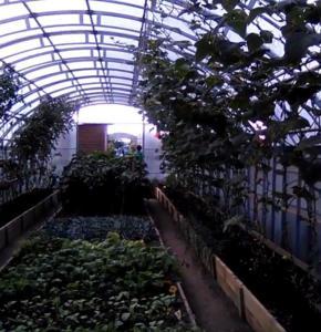 Bio növény termesztés